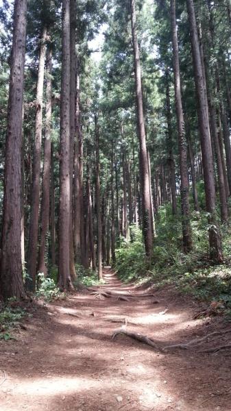青梅丘陵トレイル