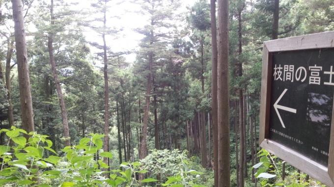 枝間の富士